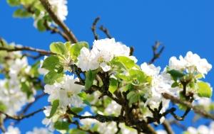 Pomladno cvetenje